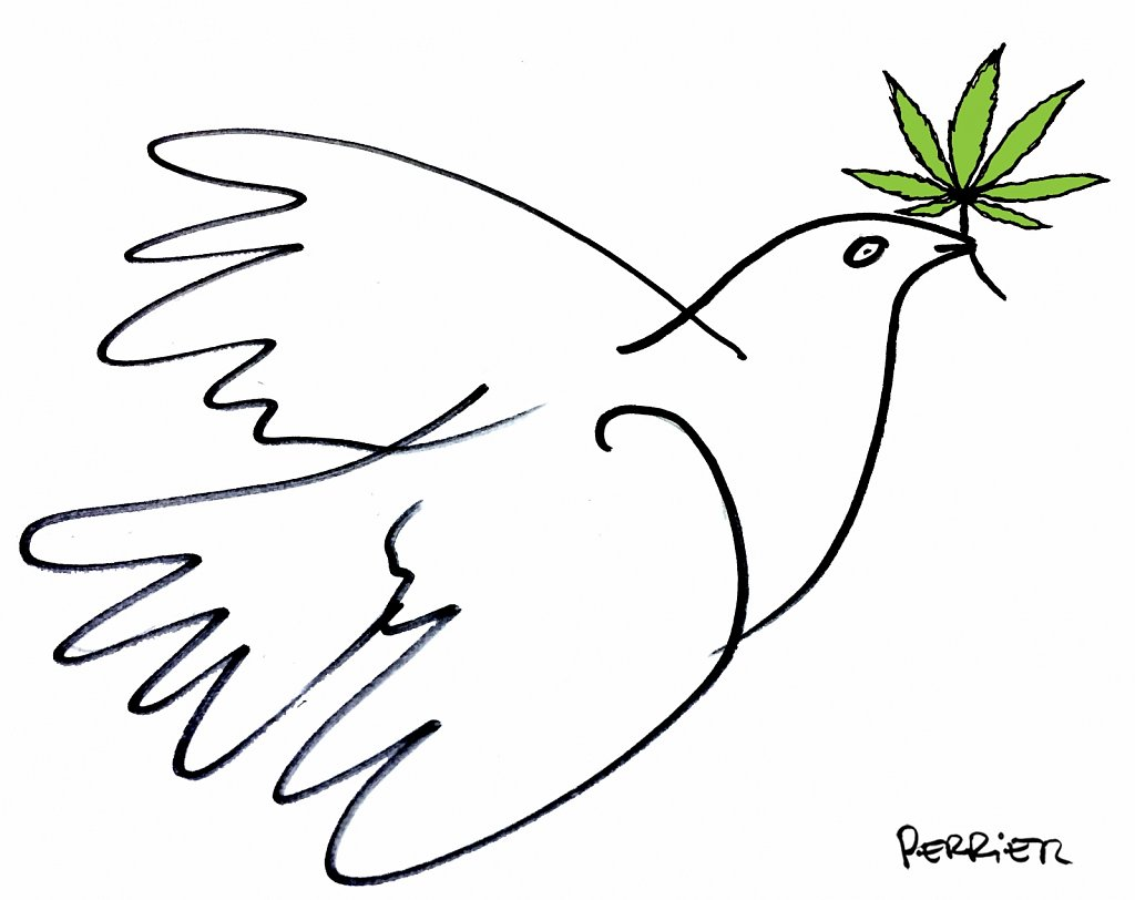 COLUMNA-paloma-picasso-marihuana.jpg